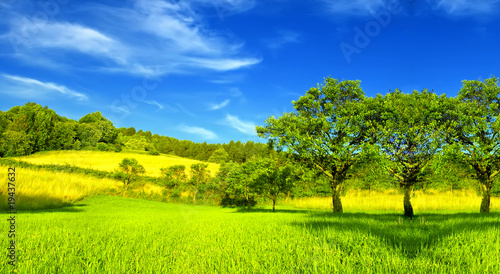 Foto op Canvas Lime groen Summer landscape