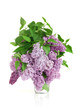 Flowers of a lilac