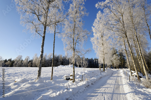 Deurstickers Berkbosje road through snow-scape