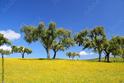 Cadres-photo bureau Campagne Wiese mit Korkeichen - meadow and cork oaks 11
