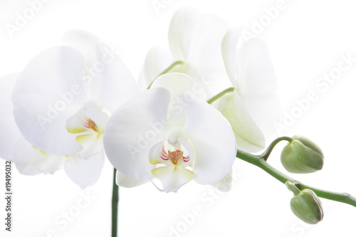 Recess Fitting Orchid Weisse Orchidee 1