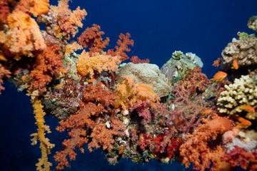 Fototapeta na wymiar flore de mer rouge