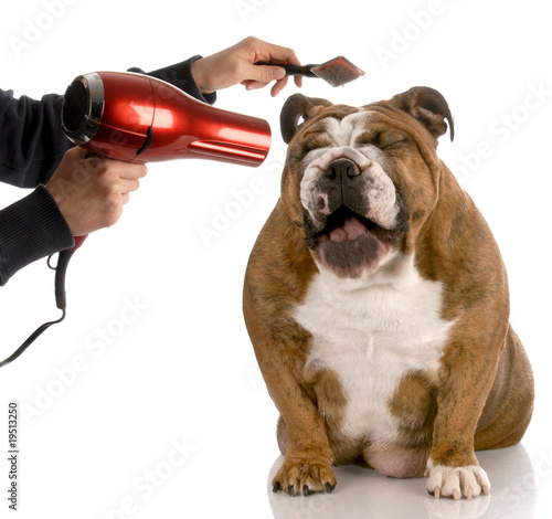 Fotografía  dog grooming