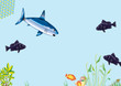Unterwasserwelt - Haifang