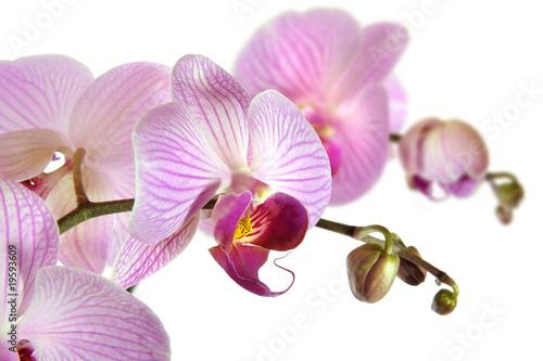Fototapeta orchidea   storczyki-14