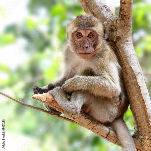 In de dag Aap Young monkey