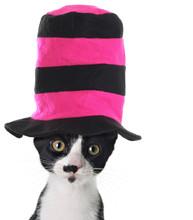 Cat Wearing A Hat