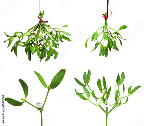 Obraz na plátně mistletoe set