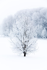 FototapetaFrosty tree