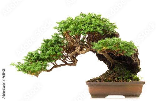 Deurstickers Bonsai Bonsai