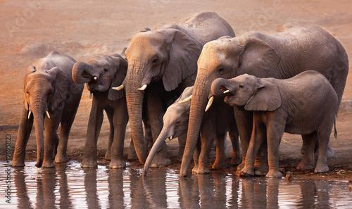 Photo Elephants drinking