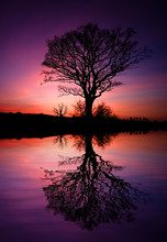 Skeleton Of A Tree With A Vibrant Sunset Reflected In A Lake.
