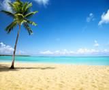 Plaża, ocean i palma