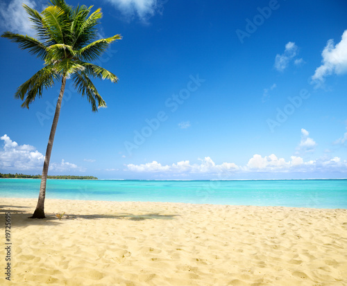 Staande foto Strand sea and coconut palm