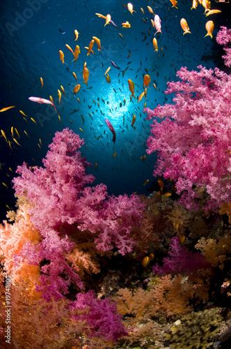 Récif en mer Rouge, Sinai, Egypte