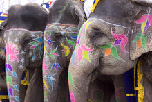 Colorful Hand Painted Elephant...