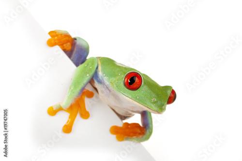 Tuinposter Kikker Page Frog