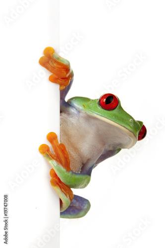 Fotobehang Kikker Crazy Frog!