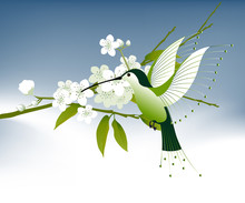 Humming Bird And Flowers