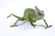Chameleon isolated on white