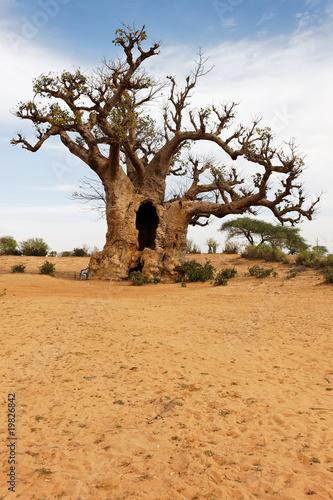Papiers peints Baobab sable et baobab