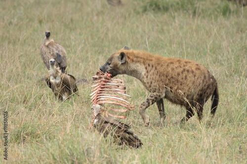 Door stickers Hyena hyena01
