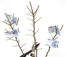 Branche Non Rentable Sacrifiée Au Profit Du Rendement