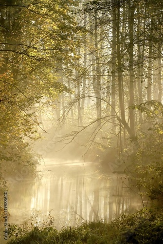 Papiers peints Foret brouillard Autumn forest with morning mist floating on the river