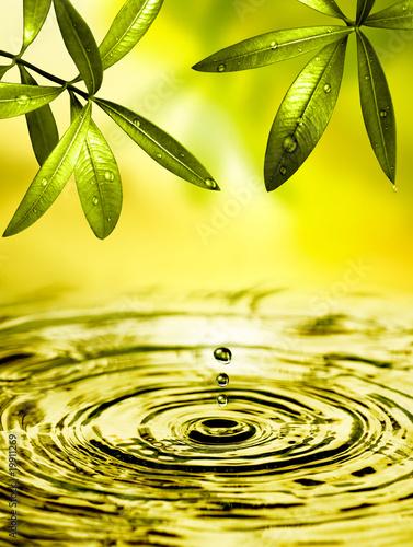 Doppelrollo mit Motiv - Blätter hängen über Wasser