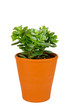 Plant in orange pot