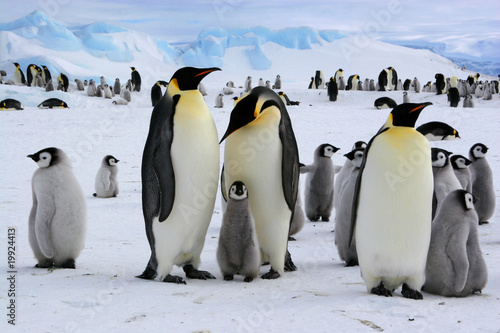 Spoed Foto op Canvas Pinguin Manchots empereurs de l'Antarctique