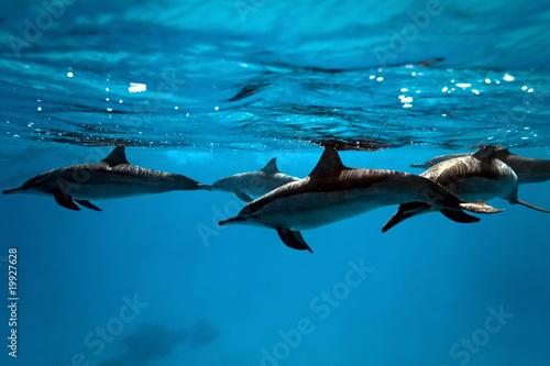 Foto op Plexiglas Dolfijnen Dolphins in the sea