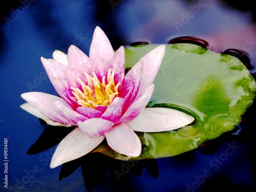 Recess Fitting Lotus flower water lily