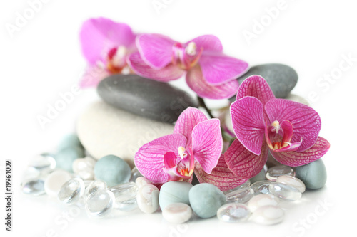 Fototapety do salonu kosmetycznego   orchidea-klasc-na-kamieniach