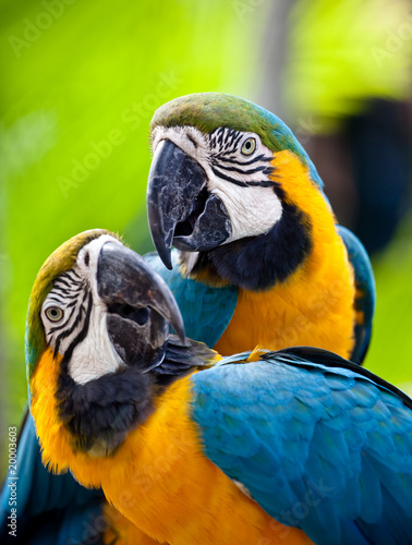 Poster de jardin Perroquets Beautiful colorful parrot