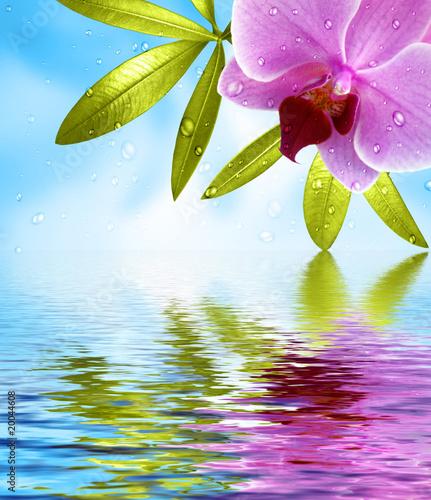 Fotorollo basic - Wellness Hintergrund mit Spiegelung (von Thaut Images)