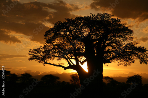 Spoed Foto op Canvas Baobab African Sunset. Tanzania, Africa