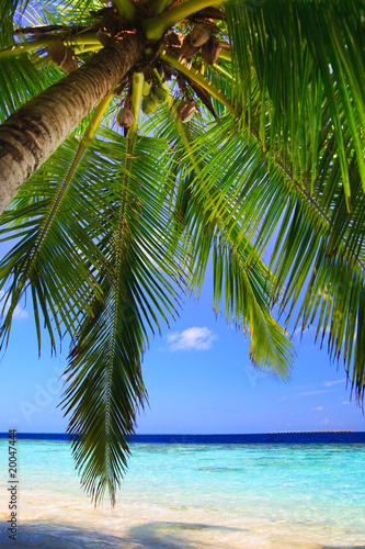 Foto op Canvas Tropical strand Tropical Paradise at Maldives