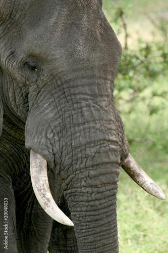 Canvas Prints Elephant Elephant. Tanzania, Africa