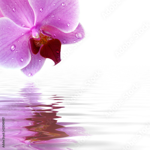 Plissee mit Motiv - Orchidee Spiegelung