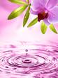 Wellness Motiv mit Orchidee