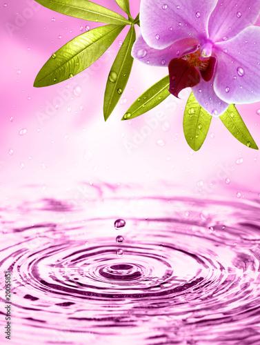 Akustikstoff - Wellness Motiv mit Orchidee