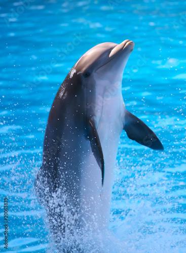Deurstickers Dolfijn A Dolphin
