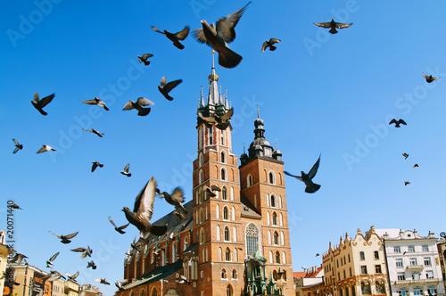 Fototapeta Church and the pigeons. Krakow obraz