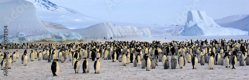 Photo sur Toile Pingouin Colonie de manchots empereurs (Antarctique, Mer de Ross)