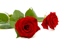 Two Red Roses Over White Background
