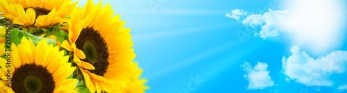 Papiers peints Tournesol tournesol en fleur fond ciel bleu - rayons du soleil - bannière