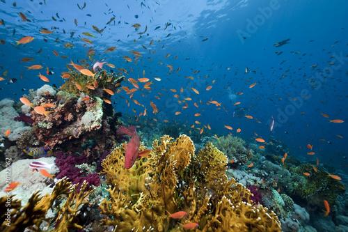 ocean-koral-i-ryby
