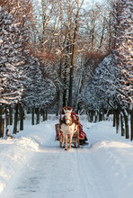 Winter Holiday-walk In Carriage With White Horse