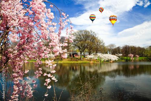 Fényképezés The Cherry Blossom Festival in New Jersey